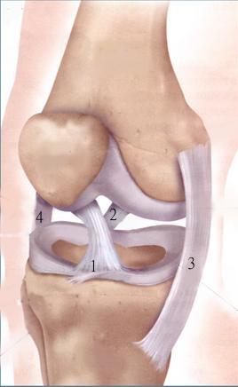 ginocchio