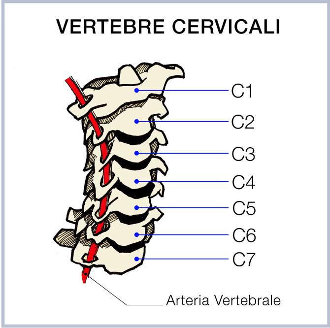 vertebre2